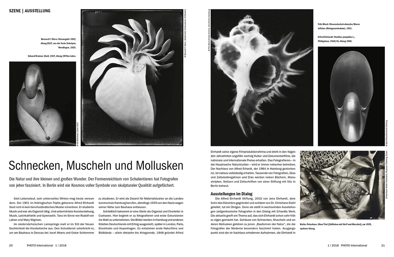 Die Berliner Alfred Erhard Stiftung zeigt eine Fotoausstellung zum Formenreichtum von Schnecken, Muscheln und Mollusken.