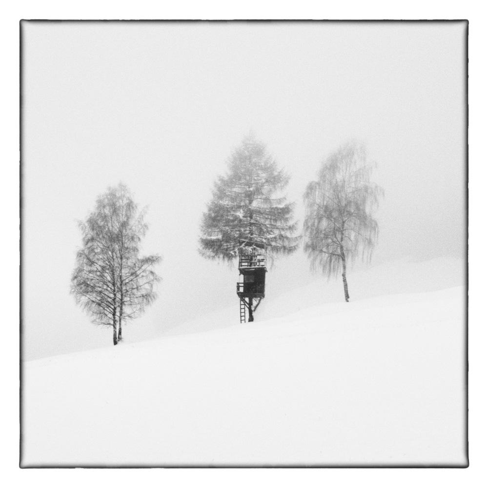 Ando-Fuchs-Winter-Photo-International-5